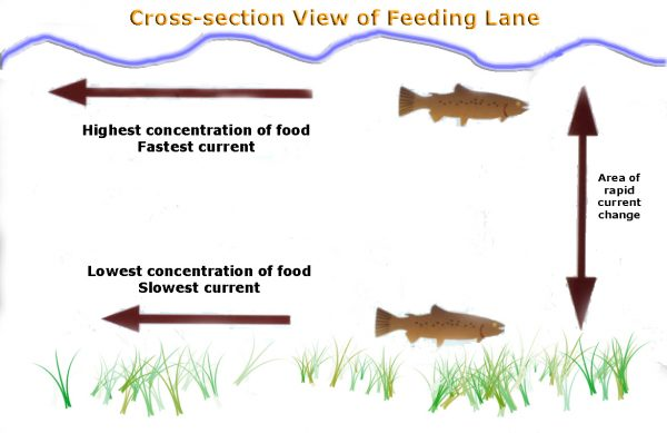 FeedingLanes2